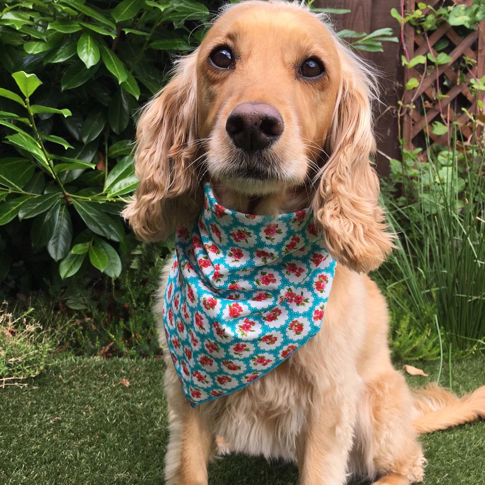 Provence Rose Teal Dog Bandana