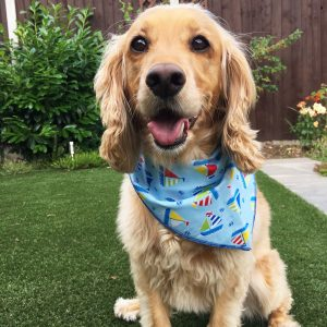 Nautical Dog Bandana from Puppy Bandana