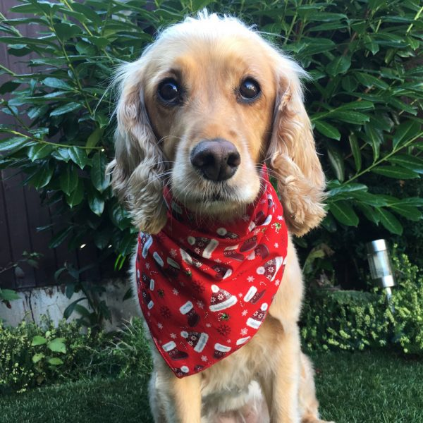All Wrapped Up for Xmas Dog Bandana