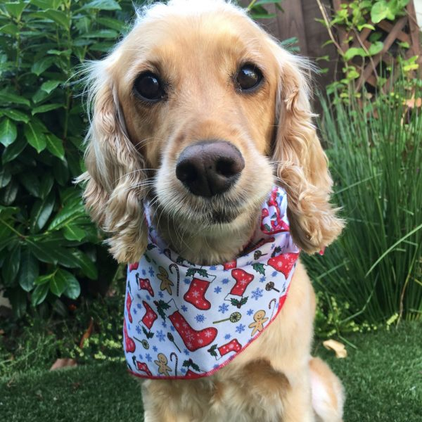 Christmas Candy Treats Dog Bandana