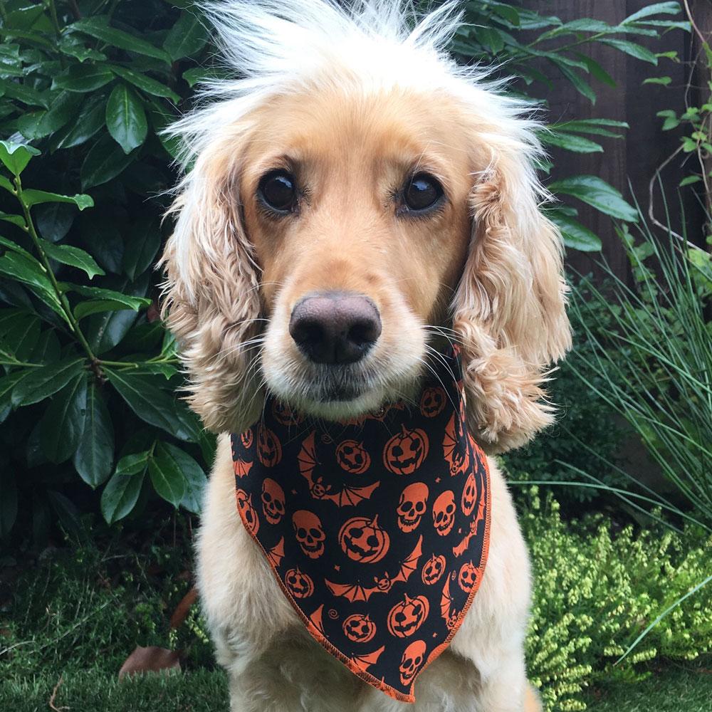 Halloween Pumpkins and Bats Dog Bandana from Puppy Bandana