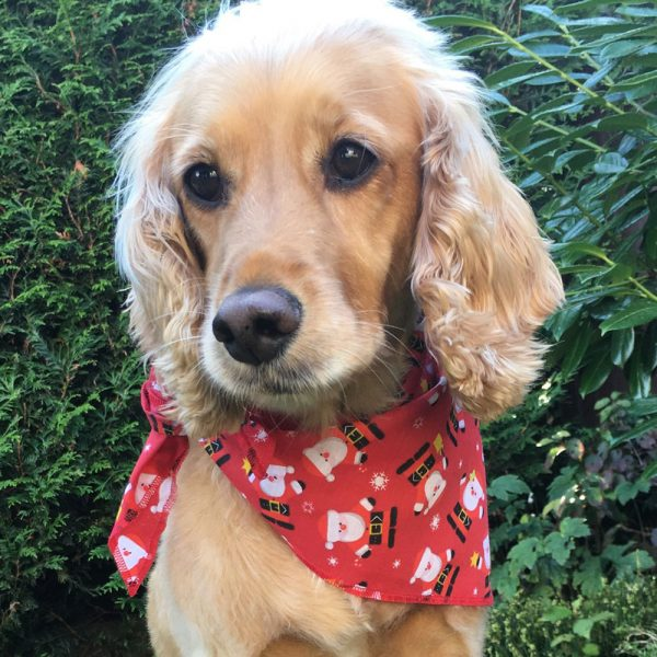 Santa Claus Dog Bandana from Puppy Bandana