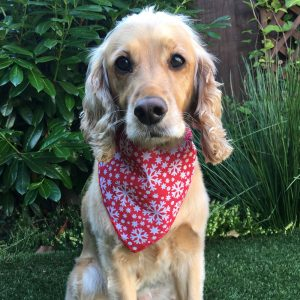 Snowflakes and Stars Dog Bandana