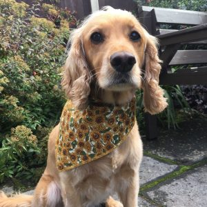 Sunflowers Dog Bandana from Puppy Bandana