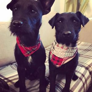 Tartan Dog Bandanas from Puppy Bandana