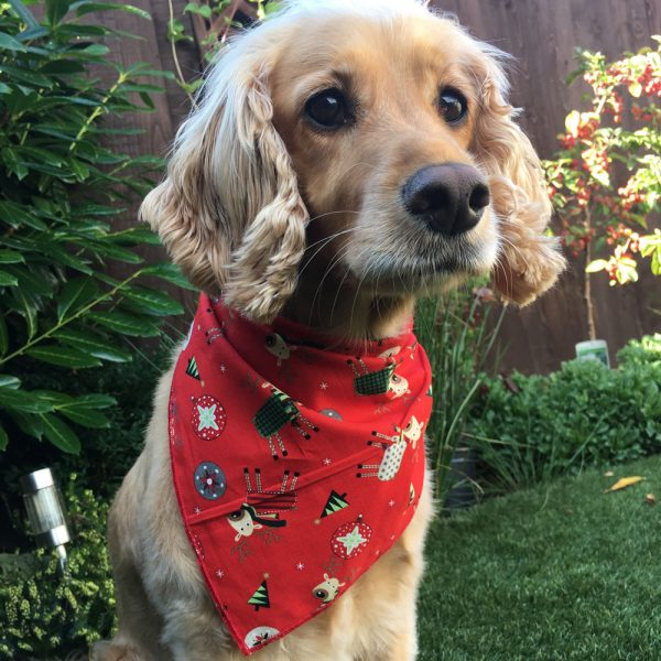 Best Dressed Reindeer Dog Bandana