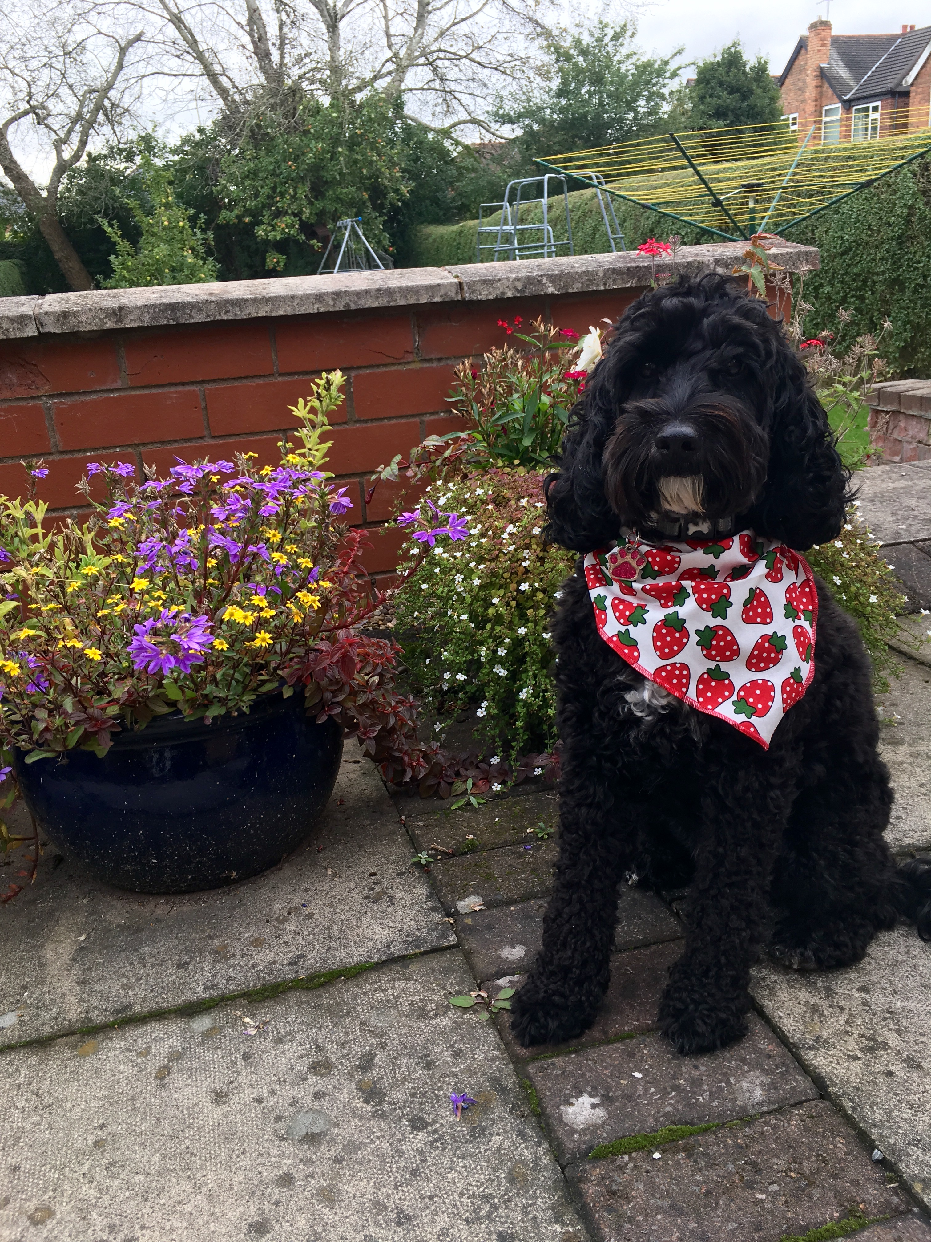 Strawberry Dog Bandana from Puppy Bandana