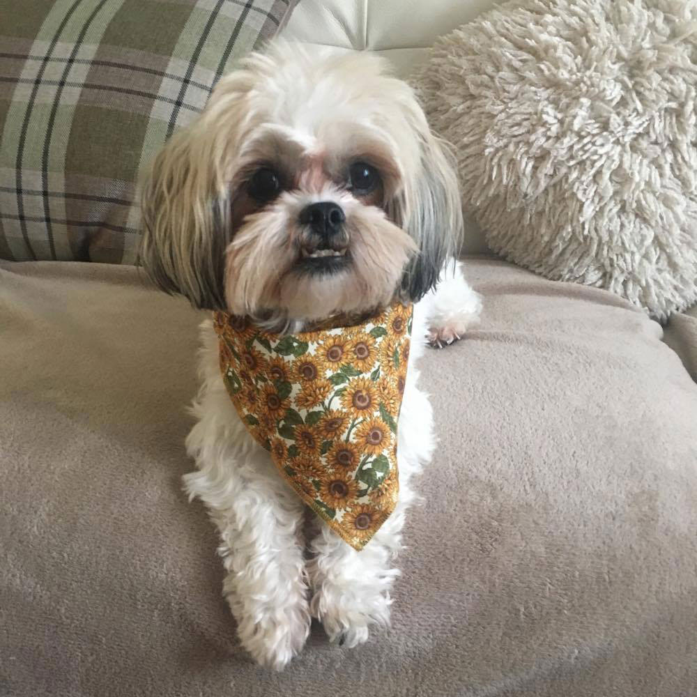 Millie in Sunflowers Dog Bandana from Puppy Bandana