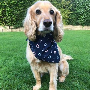 Hello Sailor nautical dog bandana from puppy bandana