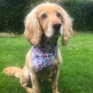 London Icons Dog Bandana