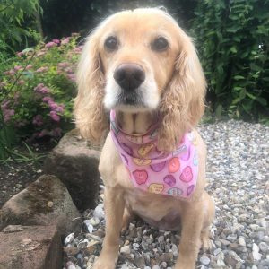 Love Hearts Dog Bandana from Puppy Bandana