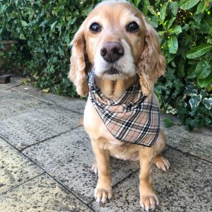 Furberry not burberry dog bandana checked dog bandana from puppy bandana