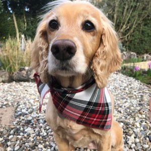 Red and White Stewart Tartan Plaid Dog Bandana