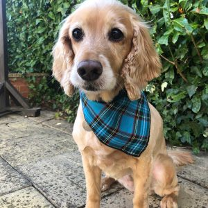 Turquoise Checked Tartan Dog Bandana